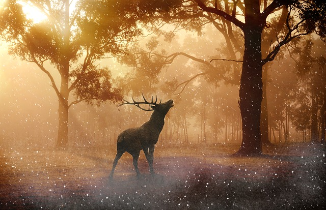 volající jelen