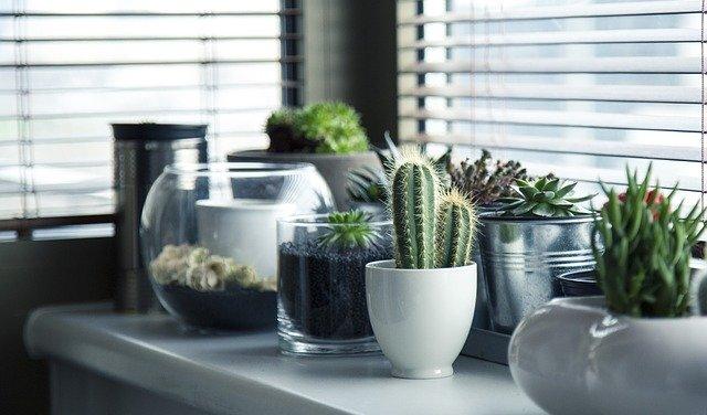 kaktusy pri okne.jpg